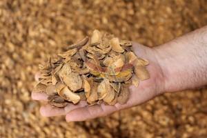 badem kabuğu-almond shell-akyel (3)