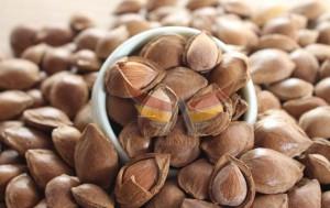 kayısı çekirdeği kabuğu-apricot kernel shell-akyel (6)
