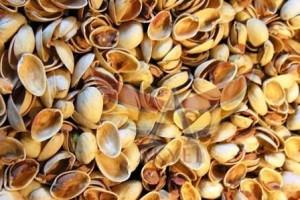 peanut shells-fıstık kabuğu-akyel (1)